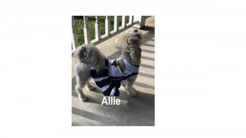 Allie 2