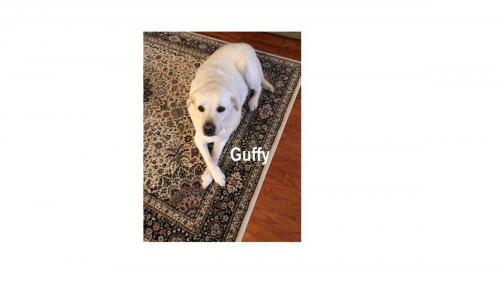 Guffy 1 (1)